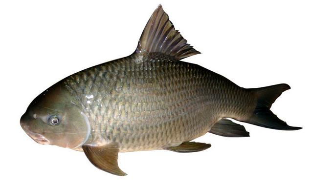 癫痫病不能吃什么鱼